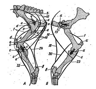 Скакательный сустав собака ортезе для голеностопный сустав