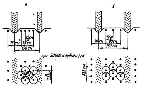 Технологические схемы посадки картофеля